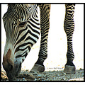 stlouis missouri usa animal zebra grevy endangered zebra MyFavoriteFriday 071307