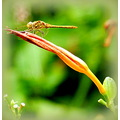 nature flower dragonfly