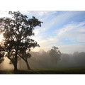 sunrise fog trees perth hills littleollie