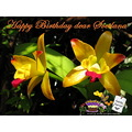 birthday card orchid jceca poulets bangkok thailand 2010