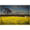 Fields of Gold Butlerstown Co. Waterford Ireland