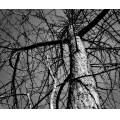tree bw nature perspective
