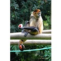animal zoo monkey Costa_Rica