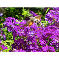 flower moth garden home Alora Andalucia Spain Canon Powershot SX10IS