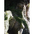 I found a door to enter the huge tree!!! (I'm serious!!)
