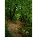 landscape forest tree bush path hillside