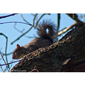 Squirrel Wildlife Nature