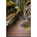 Stairway to the Forest Floor