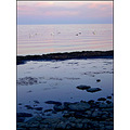 bornholm denmark evening swans baltic sea summer ocean blue reflection