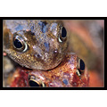 frog frogs macro nature wildlife