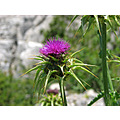 thistle el_torcal home andalucia spain