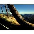 Mountain Road Running Springs CA wildspirit pankey landscape
