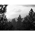 tree mountain rain colorado backlight bw