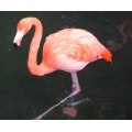 Flamingo Hong Kong
