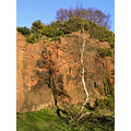sandstone quarry gorse tree shadow