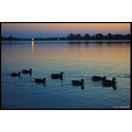 stlouis missouri us usa sunset sky lake CreveCouer ducks numbersfriday 2007