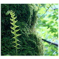 nature fern moss rain forest