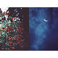 photography roses night sky moon evening collage