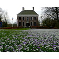 spring flower crocus Ennemaborg Groningen Holland