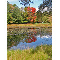 williamstown massachusetts pond autumn newengland colorsfph
