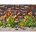 joaquin miller park jmpfph stonework wall poppies orange spring shadows