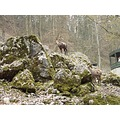 Wildpark  -  Hundshaupten