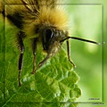 Bee insect nature fotothing friends