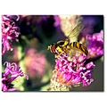 joepyeweed wildflower purple hoverfly nature