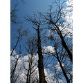 nature forest tree sky clouds