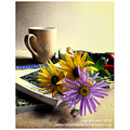 still life fine art flowers spideyj