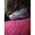 back to the cats :-) ::::::: Kuku under my blanket :::::::
