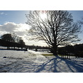 featherstonecastle Haltwhistle N England tree snow winter