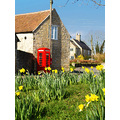 Daffodils telephone box stonesby red yellow spring
