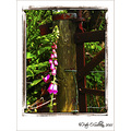 Fox Glove Flower Keel Kerry Ireland Peter OSullivan
