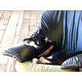 dog sleep chair friend guard hotel guest stay weekend toojay littleollie