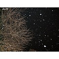 snow snowing sky night tree