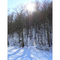 nature park landscape trees winter snow lake sun light violoncellistadelblu