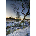 'Winter Trees': Another view between Burbage Bridge and the top of Padley Gorge on the Longshaw E...