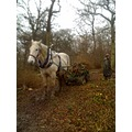 coppicing worcestershire wood hazel horse