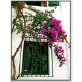window flowers beautiful cadaques spain