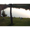 2008 lugardebaixo madeira portugal salted water lake reflection dusk ducks