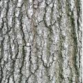 tree bark texture naturefph