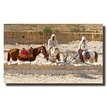 jordan petra animal horse people jordx petrx animx horsx peopx
