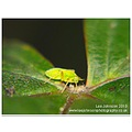 Nature Wildlife Insect Macro Green fly aphid flash Spideyj