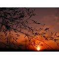 sunset weather sun macro nature natural colors spontaneous series landscape keit