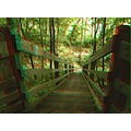 Anaglyph stereoscopic 3D stairs steps path trail park Franklin_Creek State_Park