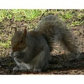 squirrel nut tree wildlife