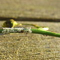 eggs moth empty stem whatisthatfriday
