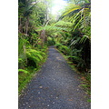 Bush walk in the Waitakeres