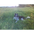 dog hot walk sun sunny day black white grass